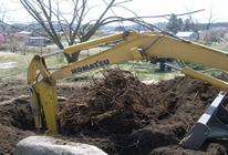伐採・抜根・枯木撤去