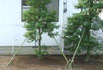 樹木の保護